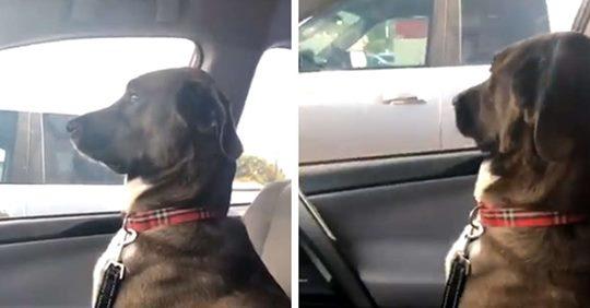 Majitelka od psa dostala studenou sprchu, když ho přivezla k veterináři...