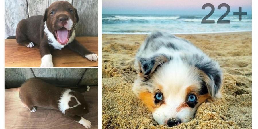 22 těch nejroztomilejších štěňat na světě