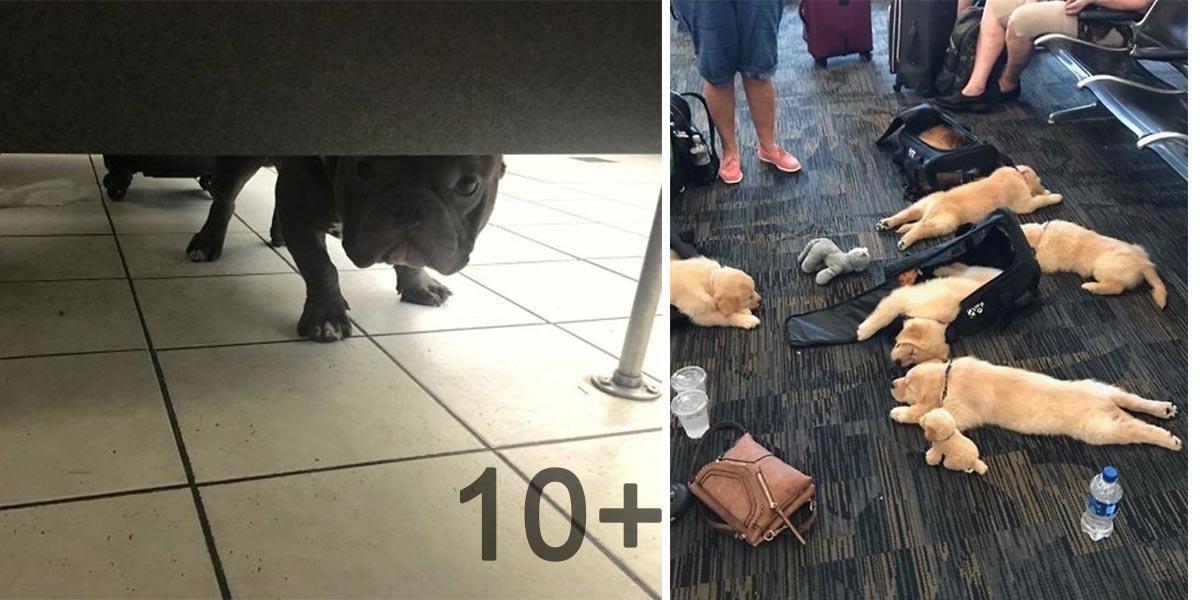 5+ neuvěřitelných psích zážitků na letišti