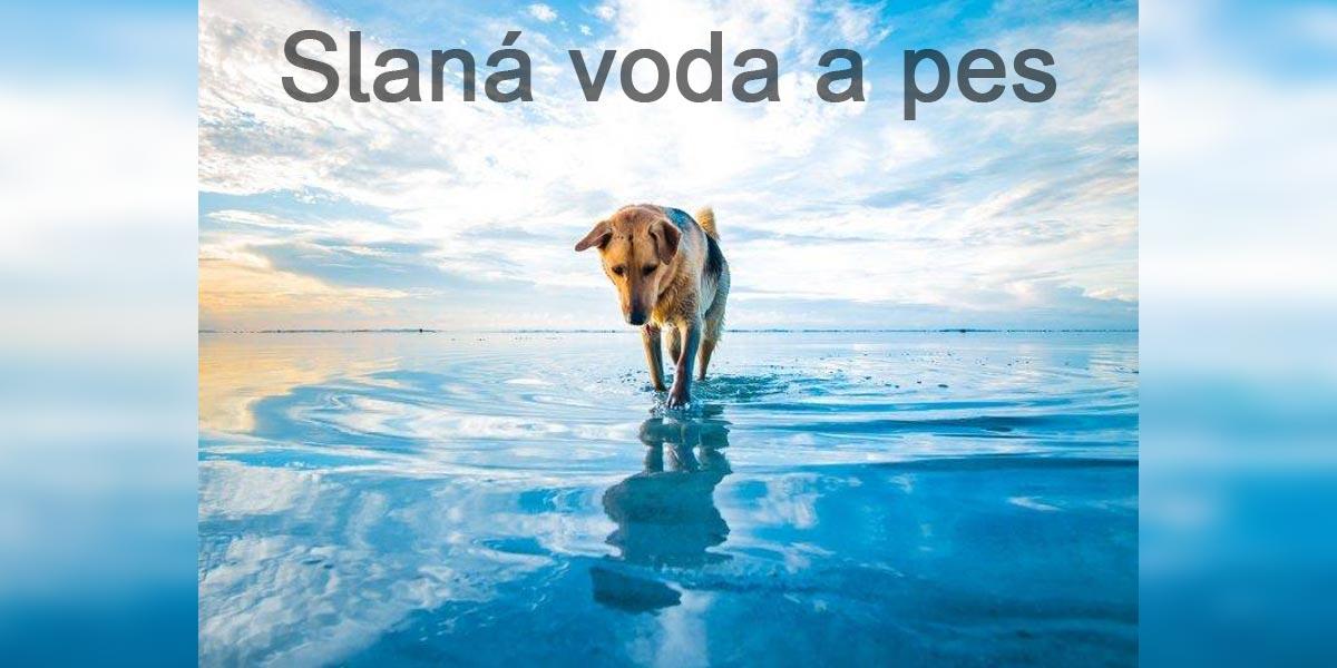 Pes a mořská voda. Riziko nebo přínos?