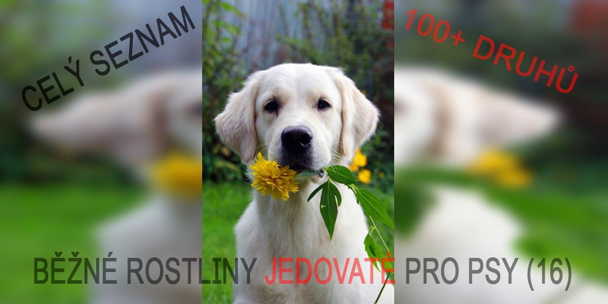 Seznam jedovatých rostlin a květin pro psy