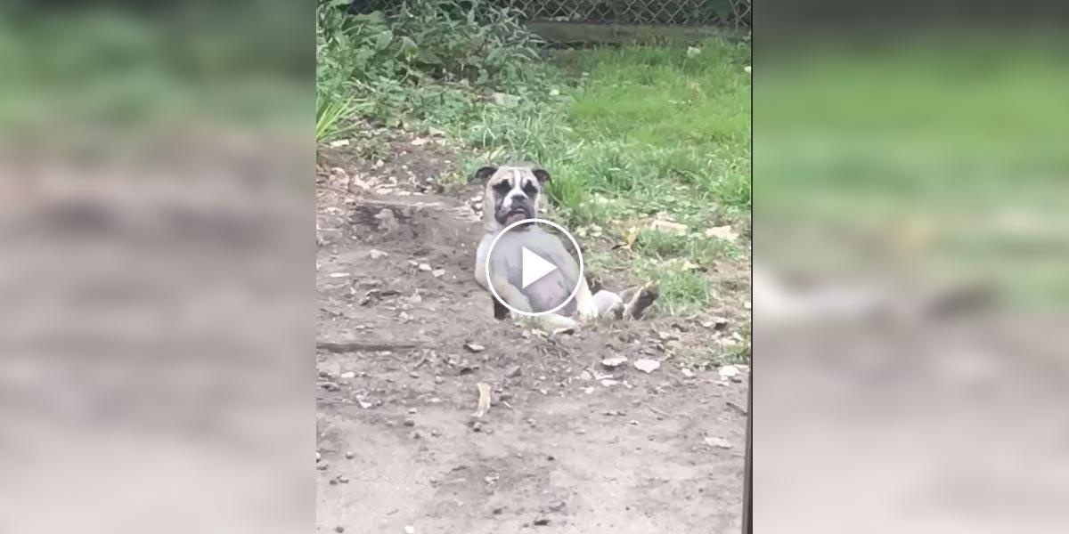 Zachráněný pes si vykopal díru na míru, a pak v ní usnul