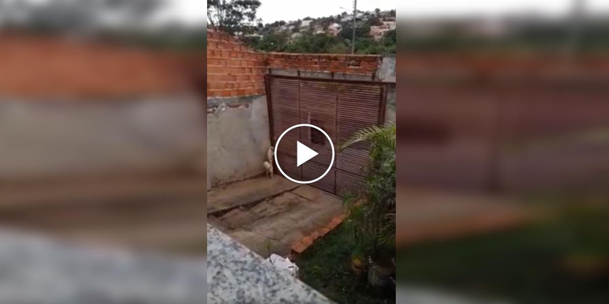 Žena čekala s kamerou, aby zjistila, jak její pes utíká