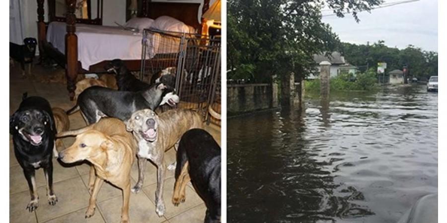 Žena na Bahamách před hurikánem pochytala 97 psů a vzala je do bezpečí