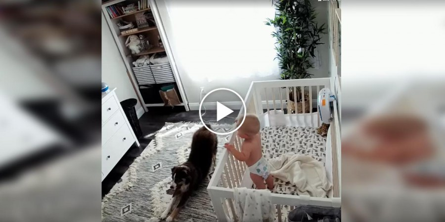 Pes, miminko a jejich ranní rutina