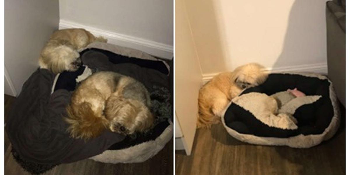 Pes odmítá spát na místě, kde spával jeho kamarád