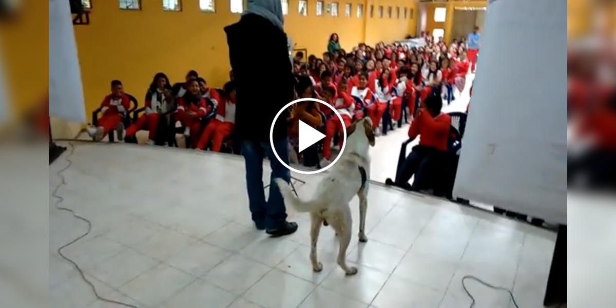 Publikum ocenilo náhodného psa, který získal větší obdiv než vystupující