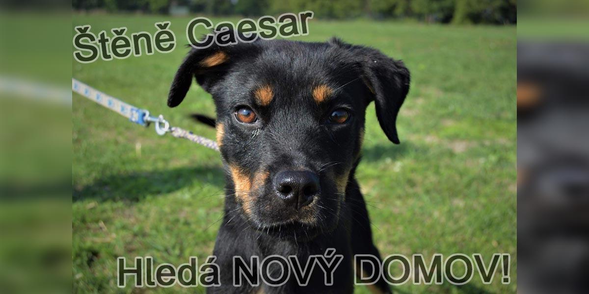 Štěňátko Caesar čeká v útulku na novou rodinu