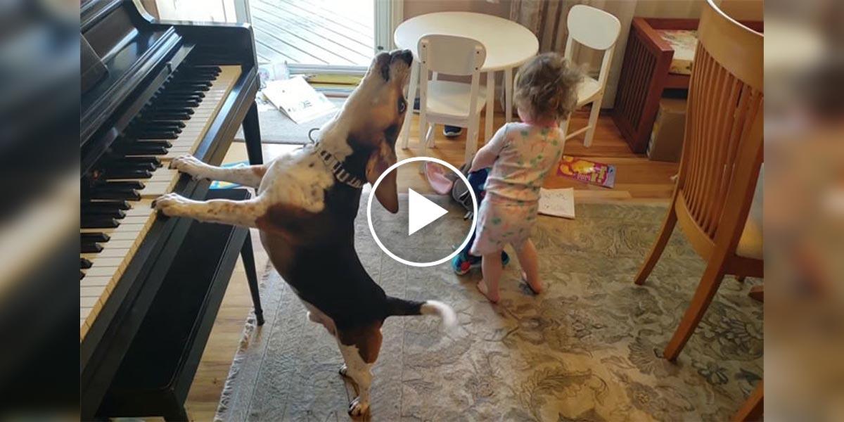 Video, se psím zpěvákem a tančícím batole, zahřeje u srdce