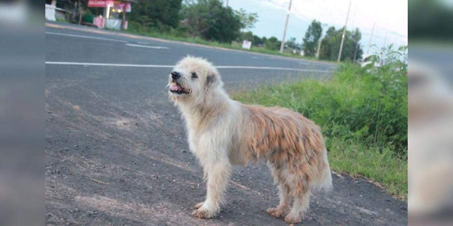 Pes čekal 4 roky na jedno místě, poté se konečně dočkal majitele, který ho ztratil