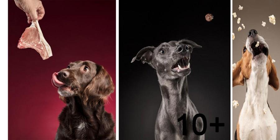 Zachytil jsem psí reakce na jídlo (NOVÉ obrázky 15+)