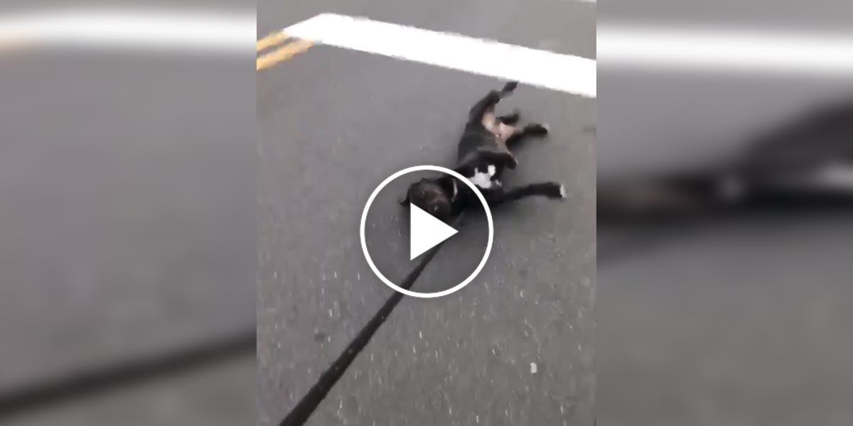 Pes protestuje proti ukončení procházky tím nejefektivnějším způsobem