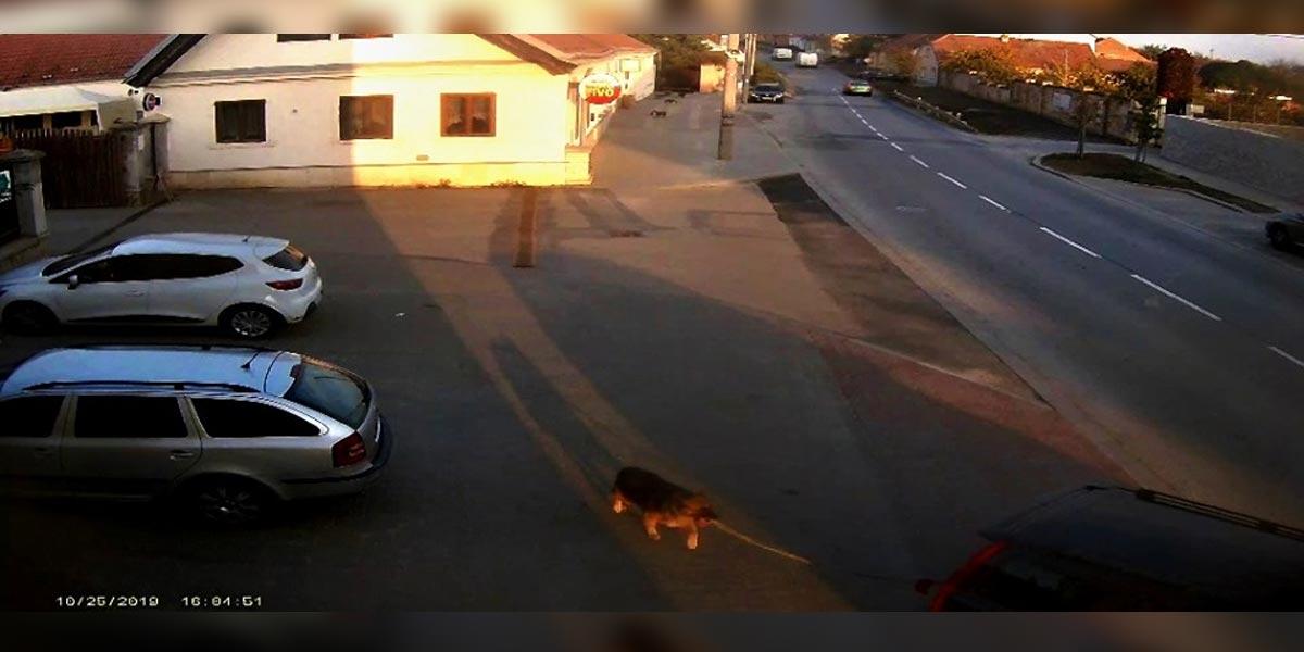 Majiteli z Brna utekl pes, za trest ho přivázal za auto a šlápl na plyn
