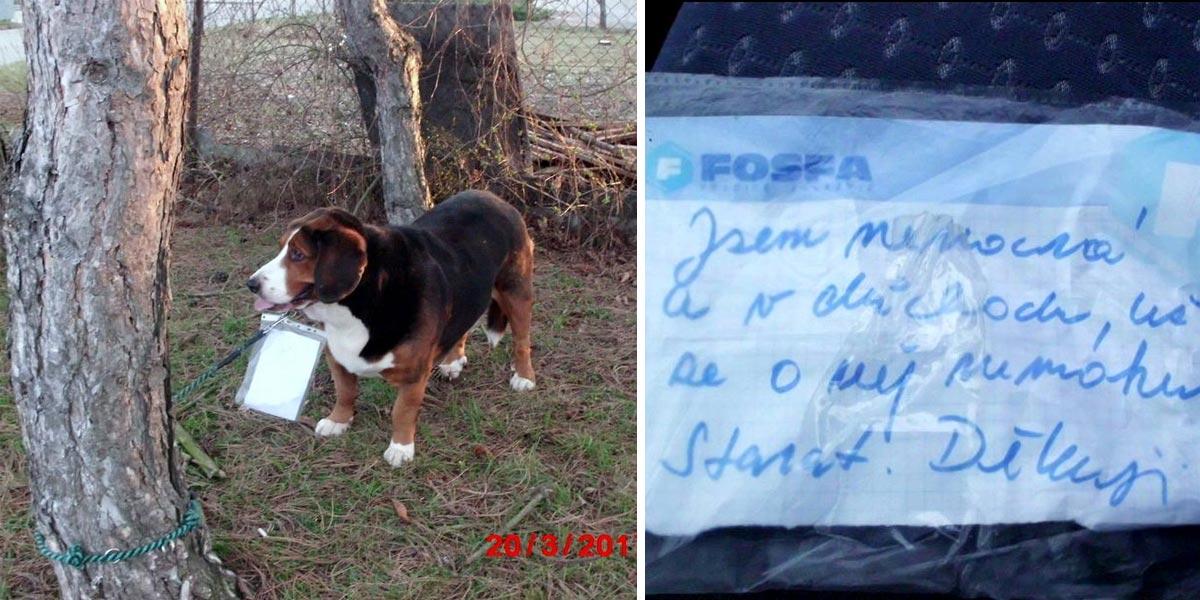 Opuštěný pes s cedulkou u krku čekal na pomoc