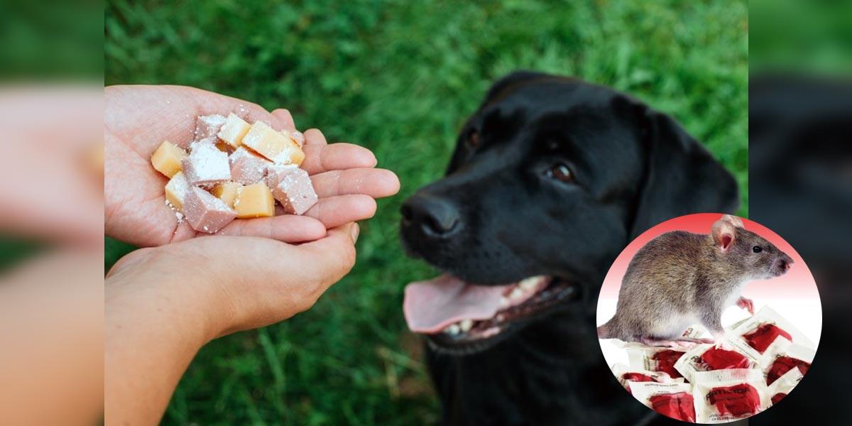 PŘÍZNAKY: Jak poznat, že se pes otrávil jedem na krysy?