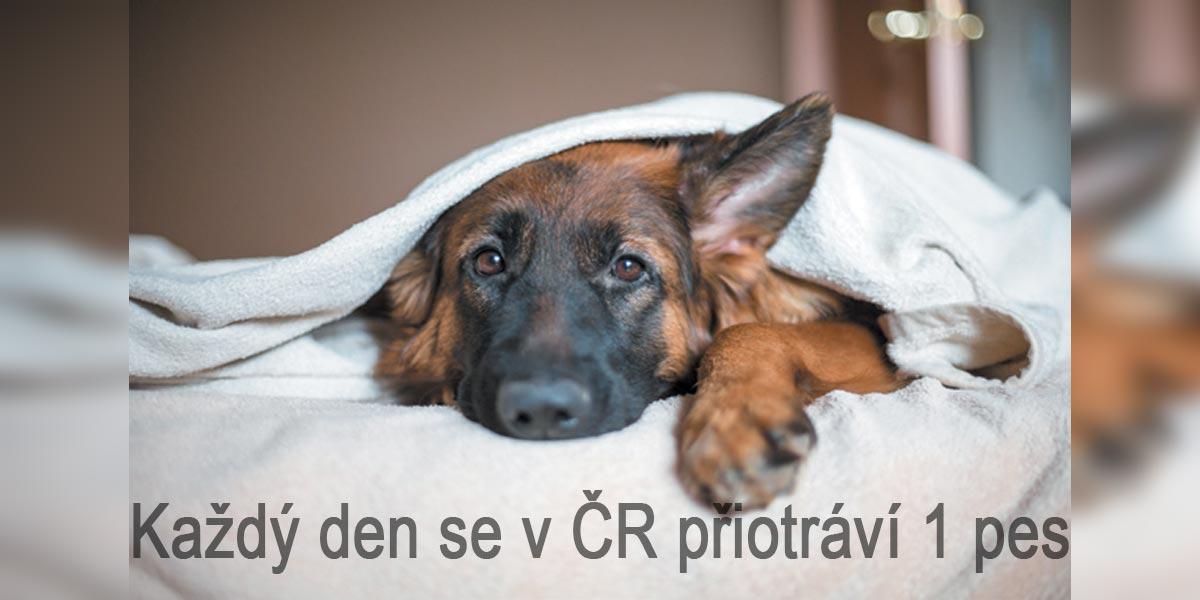 Každý týden se v ČR otráví jeden pes kvůli nepozornosti majitele