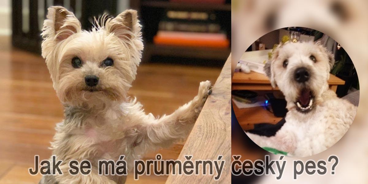 Výzkum: Kolik % Čechů má psa, kde spí a jak se má průměrný český pes?
