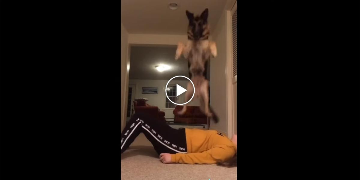 Jak probíhá výcvik psa na první pomoc?