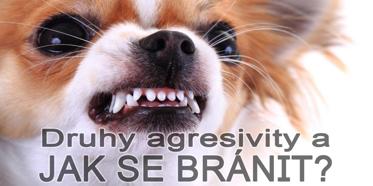 3 důvody, proč jsou psi agresivní a jak agresi efektivně předcházet