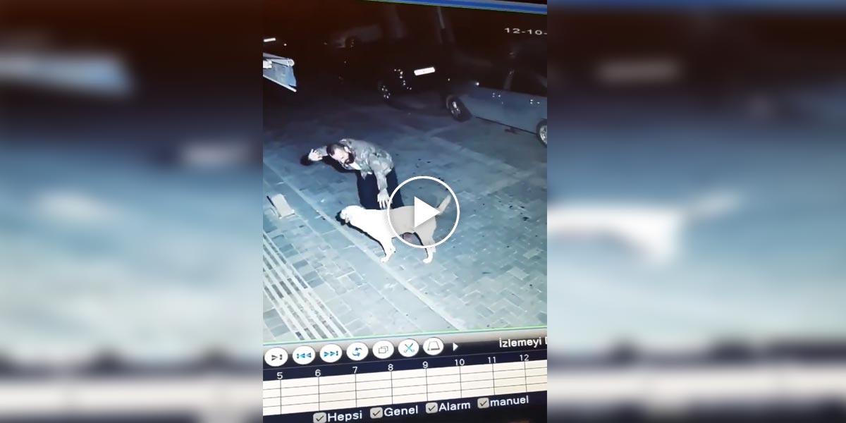 Skrytá kamera zachytila náhodného muže s pouličním psem