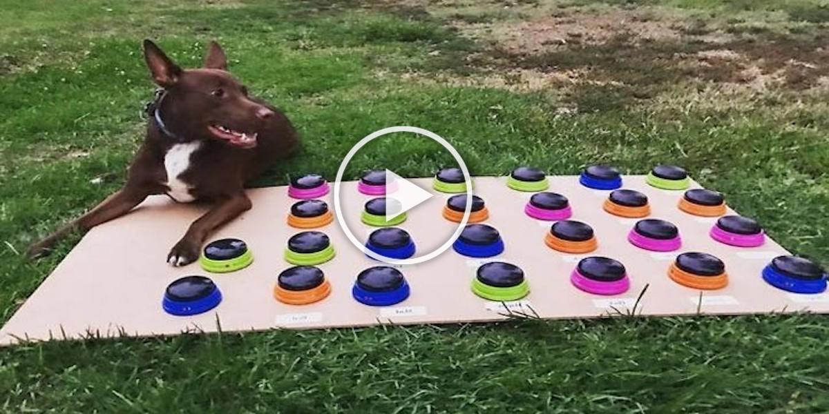 Tenhle pes se naučil mluvit s lidmi, ovládá 29 slov