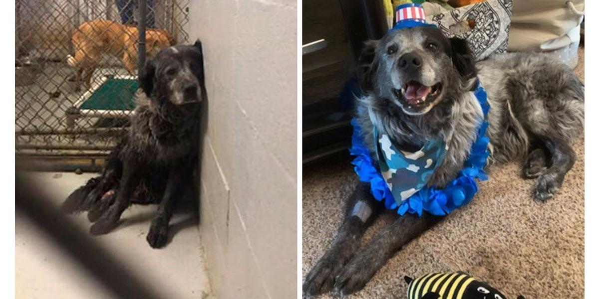 Takhle vypadá psí úsměv aneb proměna psa z útulku v novém domově