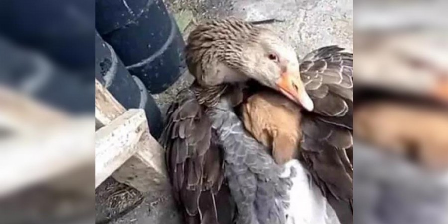 Nejprve jsem si myslela, že na něj útočí, pak se k němu přitulila