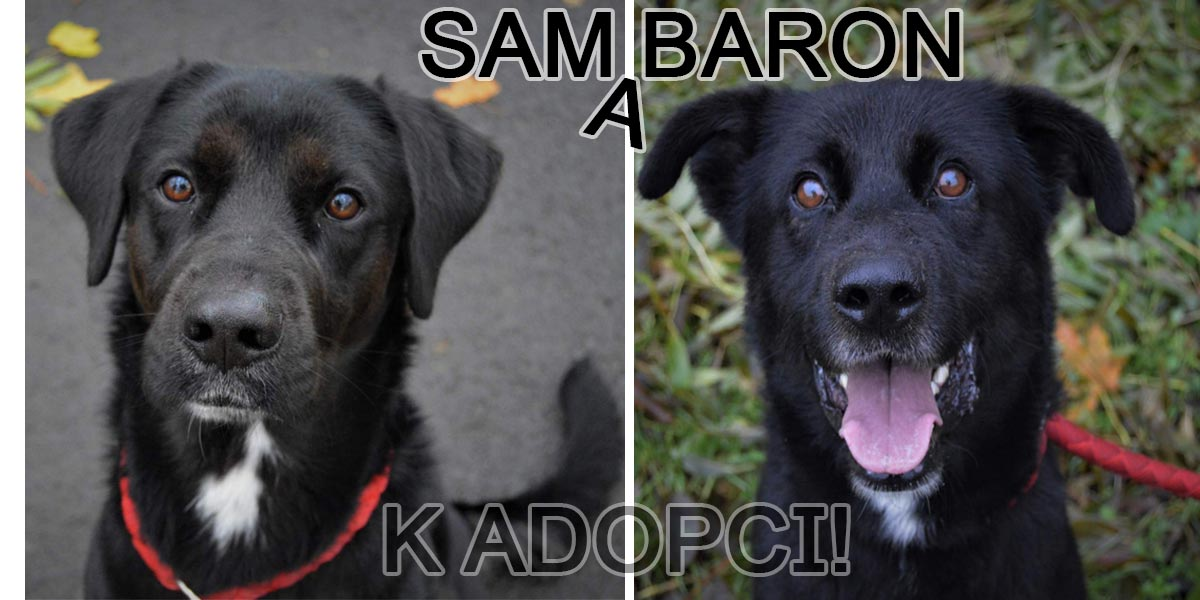 Bráchové Sam a Baron byli odebráni pro týrání, nyní hledají normální domov