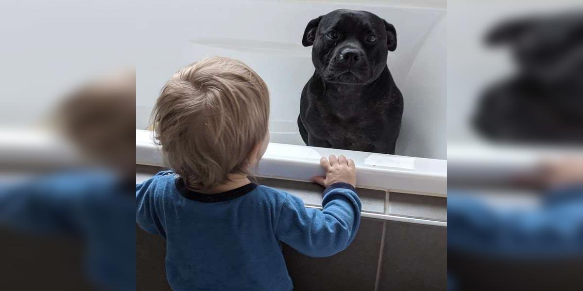 Pes se vplíží každou noc k sousedům, aby se mohl vykoupat společně s tímto chlapečkem