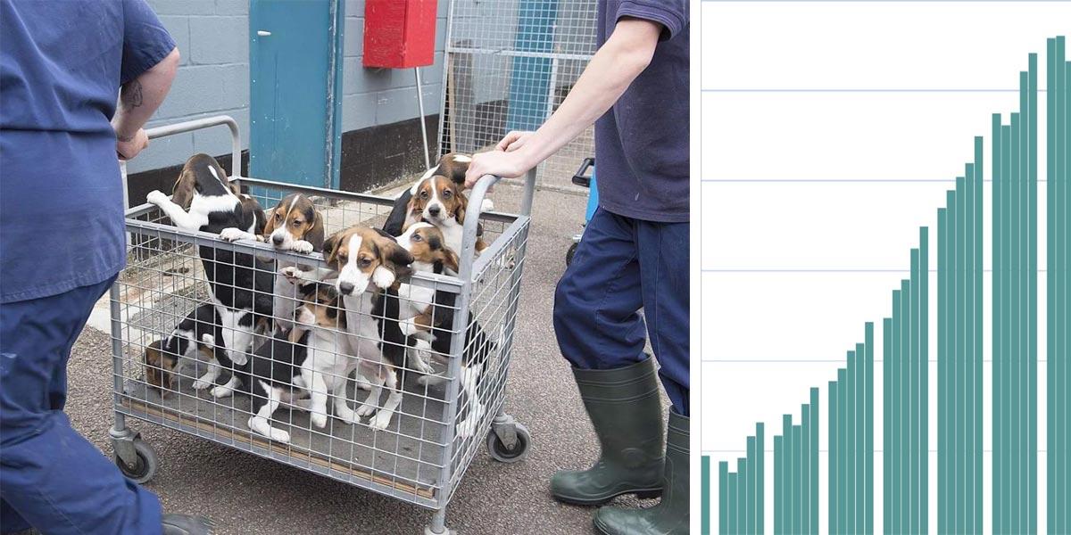 Český útulek poskytoval psy na nelegální laboratorní testy, další agentura testy navíc falšovala