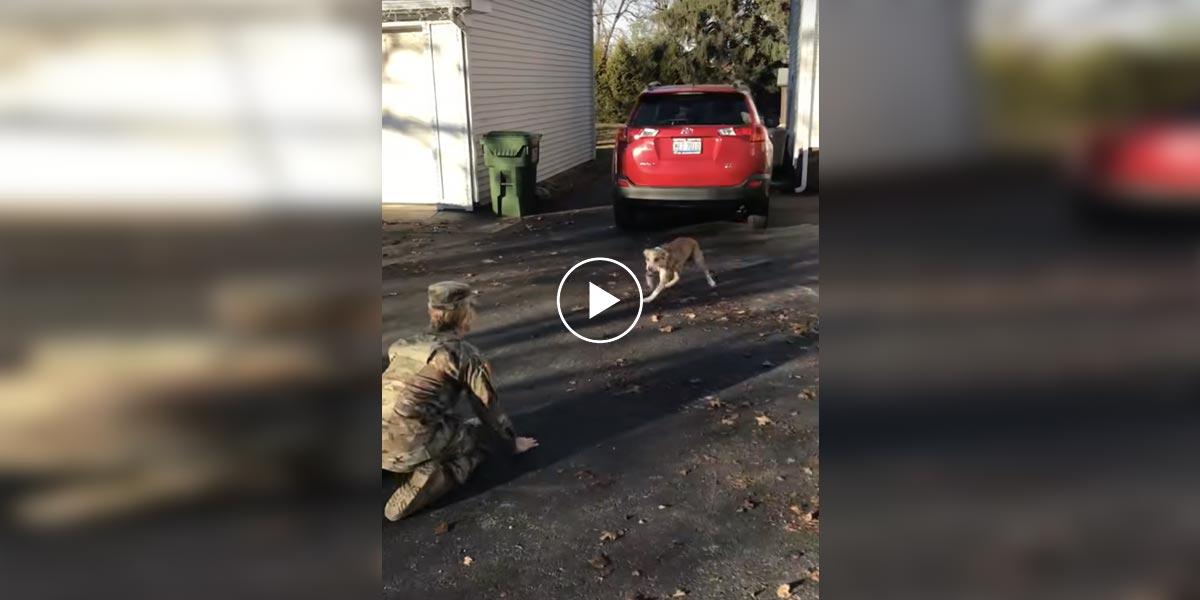 Pes nemohl uvěřit tomu, že mamku znovu vidí