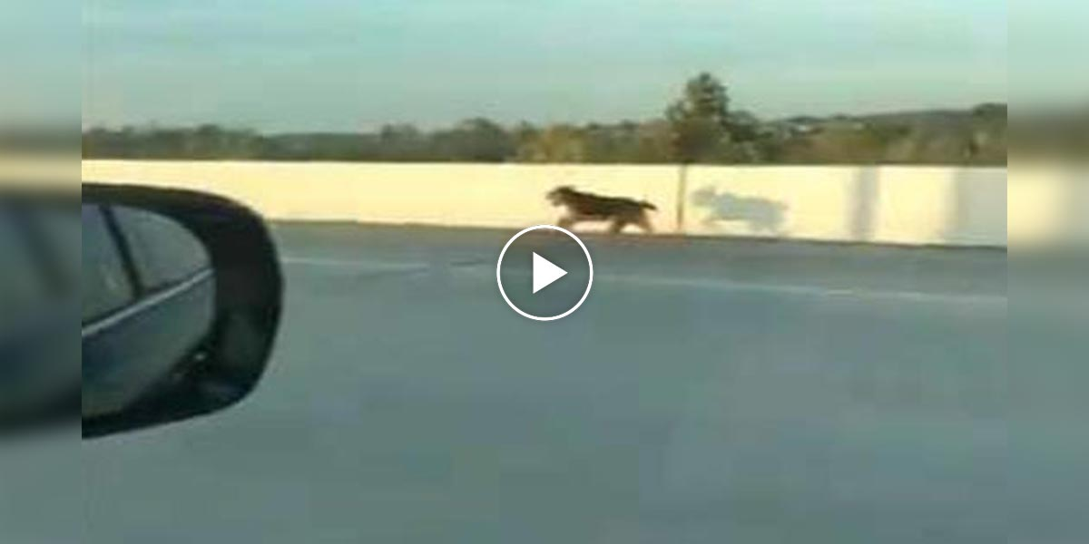 Lidé společnými silami zachránili psa na dálnici