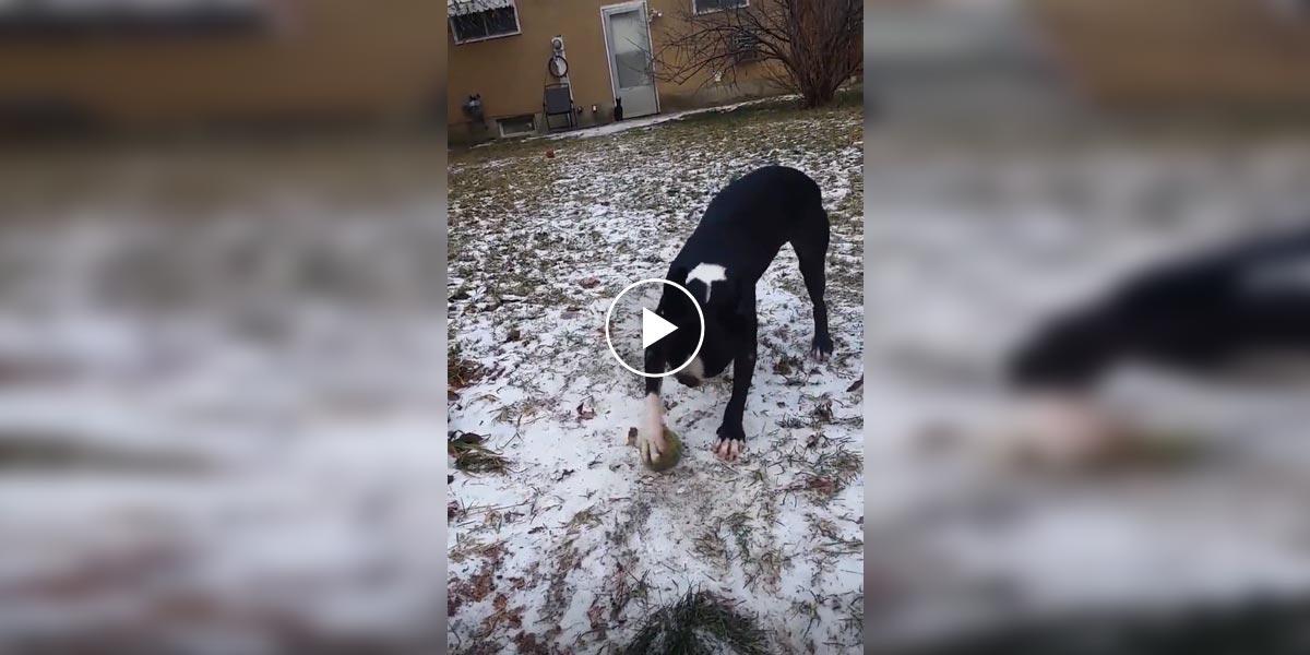 Pes nechápe, proč se jeho míček nehýbe aneb První zima se psem