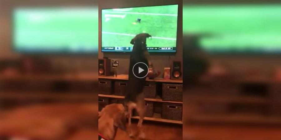 Psy televize nikdy nezajímala, ale pak se na obrazovce objevila kočka...