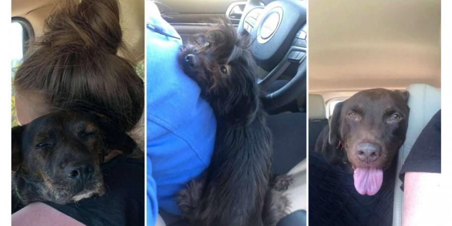 Žena šla adoptovat jednoho psa, domů přivezla nové 3 členy rodiny...