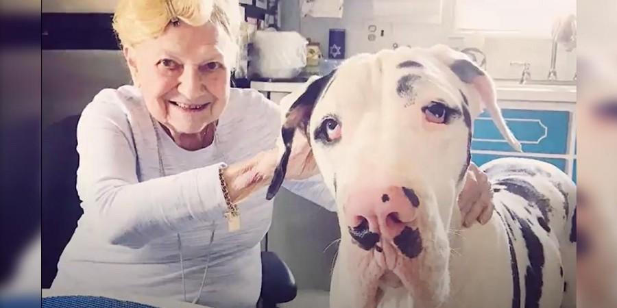 92 letá babička a německá doga jsou nejlepší přátelé