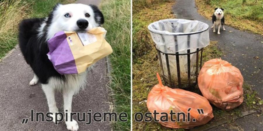 Border kolie uklízí odpadky při každé vycházce, inspiruje ostatní lidi