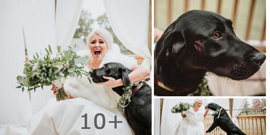Rozhodnutí nevěsty vzít si s sebou na svatební fotografie psa z ní udělalo celebritu