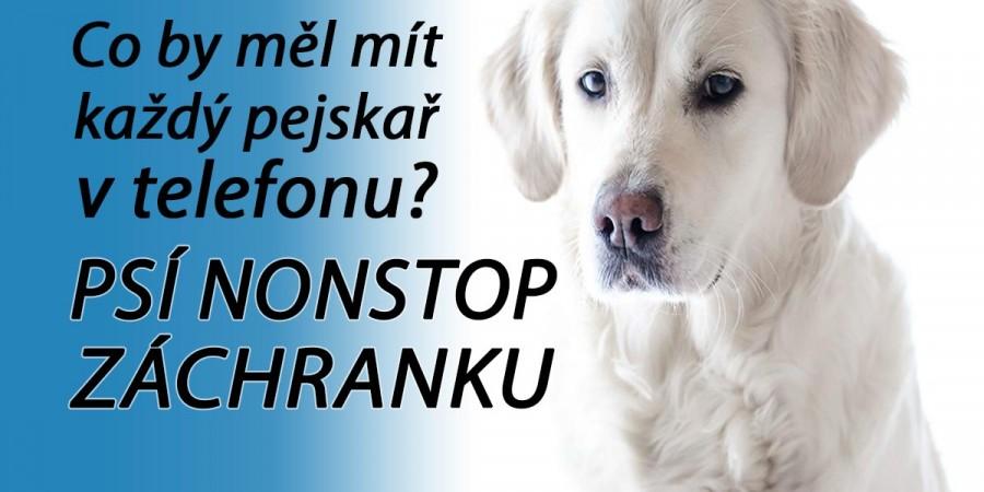 Co dělat, když se pes vážně zraní? Volejte psí záchranku: Seznam psích pohotovostí