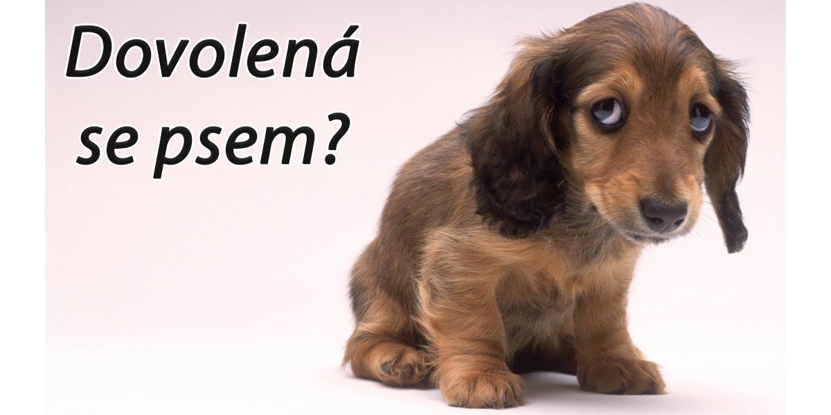 Od 1.1.2020 je na Slovensku plošný zákaz vstupu psů do gastronomických zařízení, novela neprošla