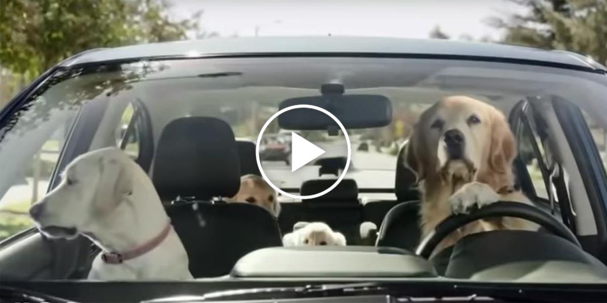 Psí budoucnost v autech, jak automobilky přemýšlejí o psech? (VIDEA)