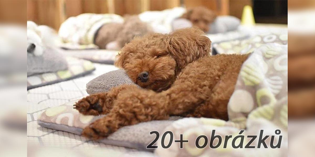 Fotky spících psů trhaly vánoční rekordy
