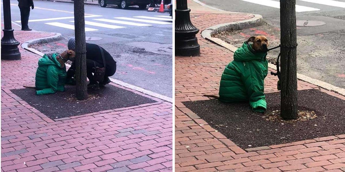 Žena uviděla u stromu třesoucího psa, darovala mu bundu, aby se zahřál...