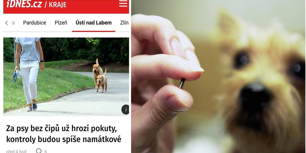 Česká média zbytečně straší, pokutu za neočipovaného psa nedostanete od městské ani státní policie