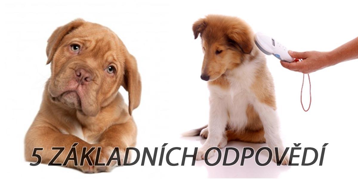 Čipování psů od r. 2020: Stručně a jasně