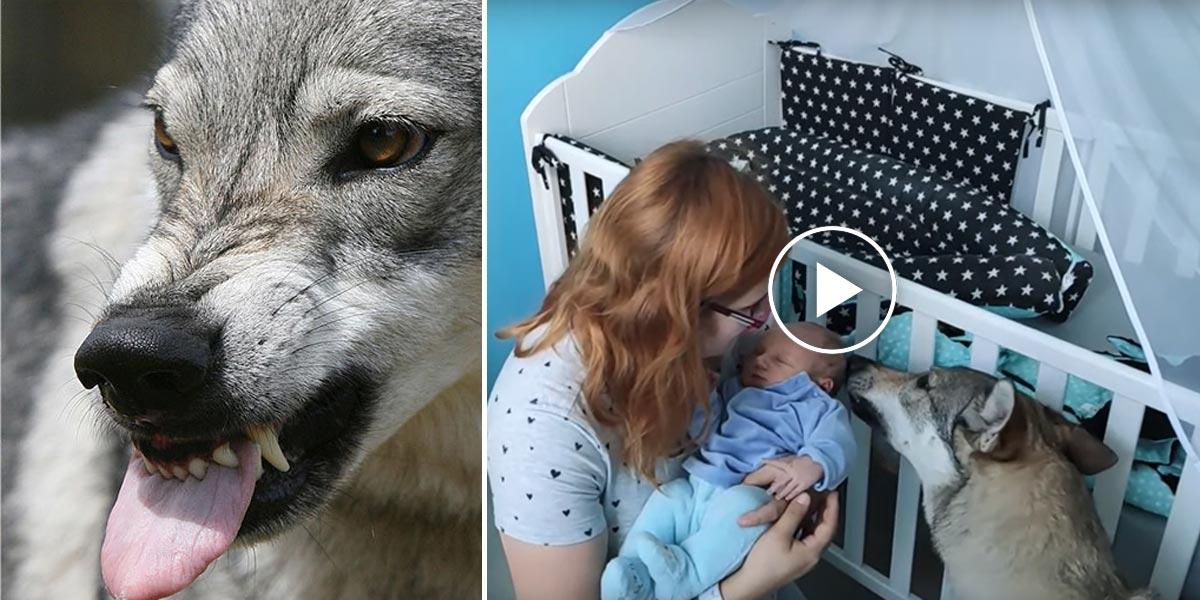 Proč utrácet psa, když za útok může majitel?