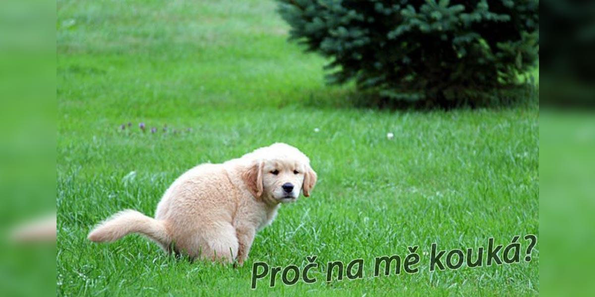 """Proč na nás pes kouká, když """"hází bobek?"""""""