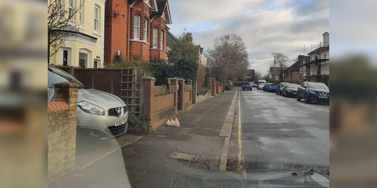 Žena zastavila, aby pomohla psovi, kterému přes plot přepadlo prase
