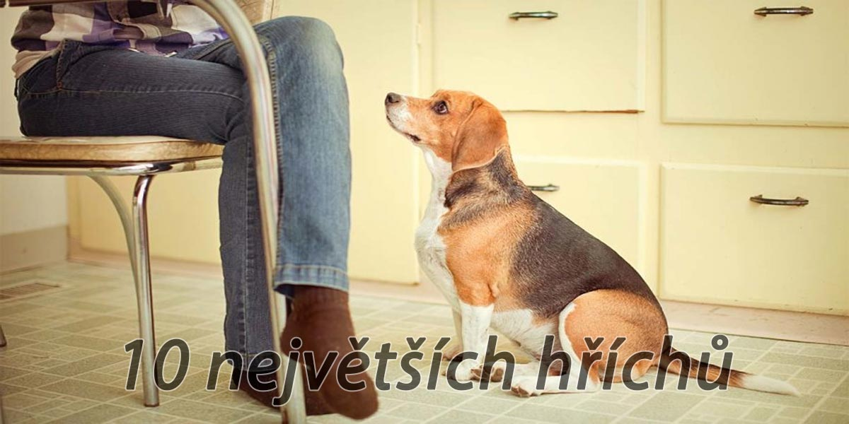 10 nejčastějších chyb při pamlskování psů