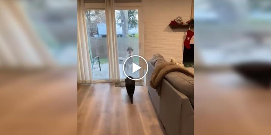 Takhle to vypadá u vás doma, když chováte psa a prasátko